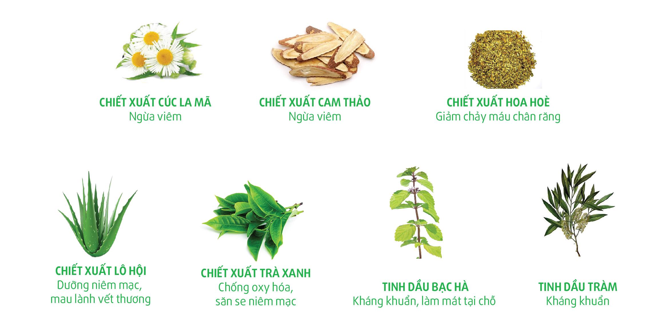 Thanh-phan-nuoc-suc-mieng-ngoc-chau